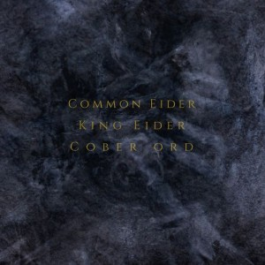 Common Eider King Eider & Cober Ord